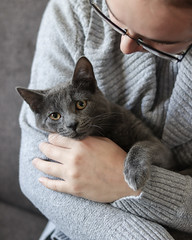 Henry the Cat (Kim Werkman) Tags: kitten cat grey furry fuzz whiskers nose paws fur fun silly social cuddley cuddle hugs hug staring eyes green blue glasses baby sweaters sweater warm gentle couch