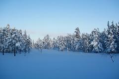 Blue hour (Bullpics) Tags: wonderland langrenn nordic woods sky landscape tree bullpics d7100 nikon skiforeningen nordmarka oslo norway cold snow winter bluehour ski forest