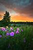 The Sitting Cure (Wayne Stadler Photography) Tags: bcparks provincialparks bc lakes rochelake canada britishcolumbia