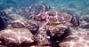 Kapalua snorkeling (kgilbertsen) Tags: maui hawaii kapalua snorkeling