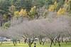 2017-12-31-武陵農場跨年_024 (essence134) Tags: twins wulingfarm