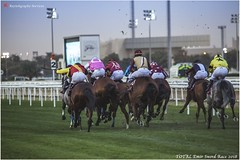 IMG_7155 copy (Services 33159455) Tags: qatar doha horse racing qrec emir horseracing raytohgraphy