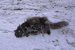 - Do you like me? (Caulker) Tags: lawn snow cat