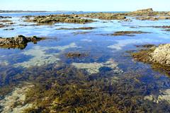 Rockpools (zassle) Tags: beach coastal landscape rockpools scenery camera:make=fujifilm geocountry geocity geostate exif:lens=xf18135mmf3556rlmoiswr exif:focallength=18mm exif:aperture=ƒ56 exif:model=xpro2 exif:make=fujifilm geolocation camera:model=xpro2 exif:isospeed=200