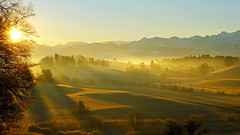 This golden morning light... (ej - light spectrum) Tags: nebel winter december dezember 2017 fujifilm xt2 landscape landschaft schweiz switzerland morning morgen morgenlicht sonnenlicht sunlight golden nature natur alpen sonnenaufgang sunrise mountains berge sunbeams sonnenstrahlen alps felder fields hügel hills misty fog