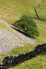 TreeAngle (RoystonVasey) Tags: canon eos m 1855mm stm zoom north yorkshire crummackdale tree limestone dry stone wall scree
