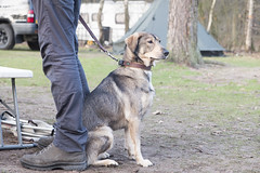 Carl Denig Wintercamping Event + 3-day Bikepacking Microadventure (Kitty Terwolbeck) Tags: carldenig winterkamperen wintercamping 2018 sintanthonis vlagberg natuurkampeerterrein staatsbosbeheer event evenement outdoor outdoors adventure outdoorshop outdoorguru nature natuur shop dog animal