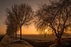 Golden Hour at Gellicum. (@FTW FoToWillem) Tags: landscape landschap holland hollanda hollande nederland netherlands betuwe gellicum goldenhour zon zonsopkomst sun sunrise sunshine nature natuur tree trees ftw fotowillem willemvernooy vorst winter weide
