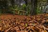 ¿Vives aquí, Fendetestas? (Paco Fuentes Vicario) Tags: bosque fendetestas hayas monte hojas otoño