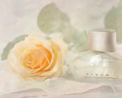 A scent of roses. (BirgittaSjostedt) Tags: rose still stilllife flower parfume bottle aroma scent fragrance birgittasjostedt
