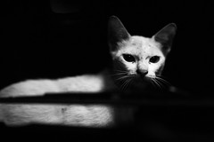 !!!! يا أبو الهول (N A Y E E M) Tags: cat portrait night light availablelight car bonnet windshield home rabiarahmanlane chittagong bangladesh pet pussy
