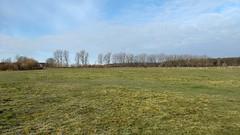 Wiese (ThomasKohler) Tags: wiese weide grün green natur nature outdoor mecklenburg mecklenburgvorpommern koppel grasssland meadow