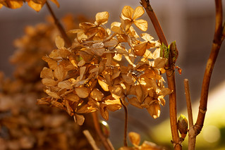 Hiver, entre automne et printemps - Winter between fall and spring