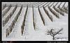 02-18 2631_Südsteiermark (werner_austria) Tags: südsteiermark winter schnee wein welschriesling pinotblanc weisburgunder sauvignonblanc riesling chardonnay morillon weinberge weingärten weinzeilen linien styria austria weis