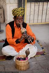 Jaipur - Snake charmer (Robert GLOD (Bob)) Tags: animal animals cobra flute instruments murli musicalinstruments punga pungi reptile reptiles snake wildlife in ind india rajasthan