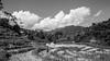 IMG_1487 (Aelred85) Tags: canon600d sigma1750mmf28exdcoshsm jungle burma myanmar shanstate mrbike hsipaw