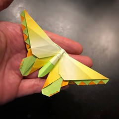 Origami 365 day 9: Birdwing Butterfly (mehjg) Tags: origami morigami butterfly michaellafosse origam365
