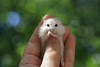 Lola (Dragan*) Tags: hamster animal pet rodent portrait eyes hand fingers bokeh nature outdoor lola