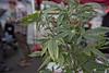 Lift Cannabis Expo 2018