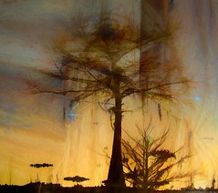 Dust off those rusty strings just one more time. (Kathryn Louise18) Tags: canon florida cypresstree kathrynlouise art abstract surreal digital manipulation contemporary modern photograph graphic design textured surrealism surrealist conceptual color roberthunterlyrics gratefuldeadlyrics