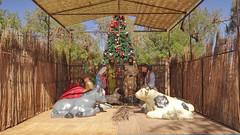 217 Weihnachtsbaum+Krippe - X-Mas tree+crib, San Pedro de Atacama (roving_spirits) Tags: chile atacama atacamawüste atacamadesert desiertodeatacama désertcôtier küstenwüste desiertocostero coastaldesert sanpedrodeatacama