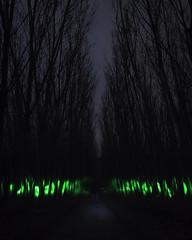 Bosque de almas (alejandrogarciaphoto) Tags: azul almas verde laser bosque lightpainting cenajo olmos arboles noche longexpo canon night lightroom 1300d photography