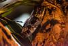_K3G0465 (julioleite) Tags: amazonjungle amazonia animalsofbrazil bazilwildlife boaconstrictor braziliananimals brazilianwildlife canon canondslr canoneflens canonusers cobra ef75300 eflens eos1dmarkii fauna faunabrasileira jiboia natgeo natgeowild nature naturephotograph natureza reptil reptile snake vidaselvagem wildlife