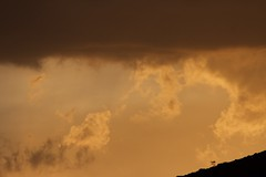 a small and windswept tree (diminoc) Tags: gnarled silhouette landscape sunset clouds gloomy overcast windy spain mayajourneying basquecountry paisvasco minimal minimalistic
