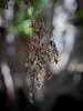 Dead Naure (Tomas_Boquite) Tags: nature dead muerte dry bokeh