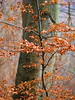 Young And Old (gerrit-worldwide.de) Tags: olympus em1 mzuiko7518 2017 beech buche forest winter