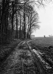road to...mud (salparadise666) Tags: kw patent etui 9x12 large format view analogue film camera nils volkmer fomapan caffenol landscape nature forest frozen season trees white monochrome vintage black hannover region niedersachsen germany north german plains