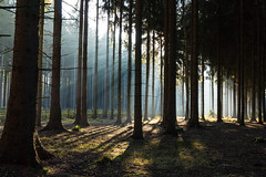 Long stream of forests (Petr Sýkora) Tags: les podzim nature forest trees morning light shadows czech