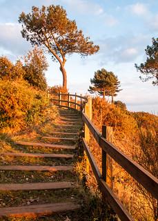 Cliffs of Poole Harbour