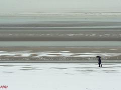 Hiver à la mer 2 (MRI2009) Tags: mer merdunord plage hiver neige nieuwpoort promenade