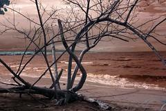 Infrared Cahuita National Park (334) (Beadmanhere) Tags: costa rica cahuita national park infrared