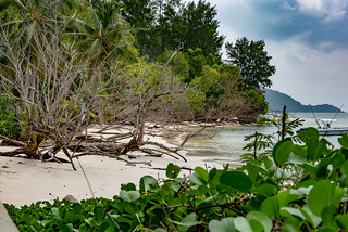 The Cycle of Nature. Praslin Island Seychelles