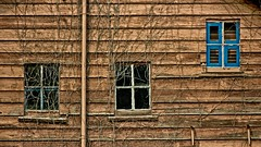 Vine Wall 3796 B (jim.choate59) Tags: vines wall window ugly maskingtape jchoate hww d610 on1pics