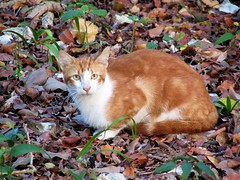 Kitty cat (thomasgorman1) Tags: cat feline feral kitty wild canon akumal mexico outdoors leaves weeds