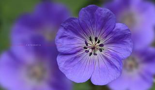 El lenguaje de las flores - La Flora de la península Ibérica // The flora of the Iberian Peninsula