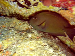 Fish (markb120) Tags: animal fauna fish coral water sea underwater diving scuba