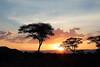 Couché sur la savane (Chamaloote & Fabrizio) Tags: soleil couchédesoleil souvenir voyage tanzanie tarangire acacias arbre silhouettes