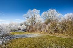 The fascination of winter (++sepp++) Tags: bayern deutschland landscape landschaft landschaftsfotografie lechfeld länder rauhreif wetter winter heiter sonnig sunny graben de bavaria germany hoarfrost bäume trees bright