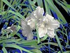 Flowers! (maginoz1) Tags: flower foliage abstract art lilies clematis iris white pink summer january 2018 bulla melbourne victoria australia manipulate curves canon g16