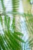 Orto Botanico (Mattia Gasparella) Tags: nature nikon nikond3200 35mm ortobotanico unesco padova visit travel green