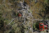 Drone hawkweed detection (Environment + Heritage NSW) Tags: drone detection weed weedcontrol weedprogram weedmanagement hawkweed hawkweederadiction orangehawkweed huntinghawkweed