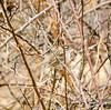 White Throated Sparrow (Neil DeMaster) Tags: bird conservation conservenature conservewildlife keeppubliclandpublic keepourairclean keeppubliclandspublic nature njwildlife njnature njbird nj naturephotography outdoor outdoorphotography protectourenvironment protectwildlife protectnature wildlife wildlifephotography sparrow songbird whitethroatedsparrow