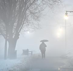 Today it's fog... (Chancy Rendezvous) Tags: umbrella fog walk walking man lamp lamppost bench trees worcester park elmpark massachusetts weather nikon snapbridge