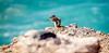 Ardilla moruna. 01. La Pared, Fuerteventura, enero 2018. (Jazz Sandoval) Tags: 2018 elfumador españa exterior enlacalle amarillo azul beautiful animal ardilla ardillamoruna contraste color canarias calle curiosidad colour curiosity contraluz cian digital day desierto fotografíadecalle fotodecalle fotografíacallejera fotosdecalle fuerteventura white islascanarias jazzsandoval luz light blue naturaleza una streetphotography streetphoto unica ùnica water agua mar lapared aoi elitegalleryaoi bestcapturesaoi aoi3levels
