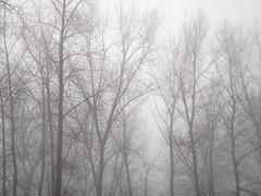Misty January Walk
