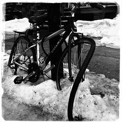 Les affres de l'hiver/Winter in Montréal (bob august) Tags: 2018 2018©rpd'aoust aperture3 bw bike blackwhite février formatcarré hiver iphone iphone4 montréal neige noiretblanc snow squareformat vélo villeray winter